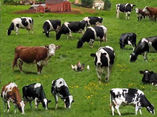 Quiltstof met afbeelding van verschillende koeien rassen 337