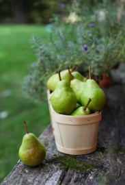 English Pear & Freesia