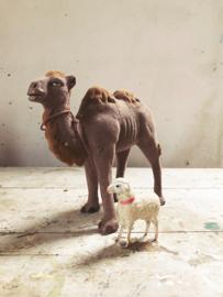 Flock kameel