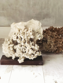 Big old coral object