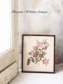 Redouté Roses