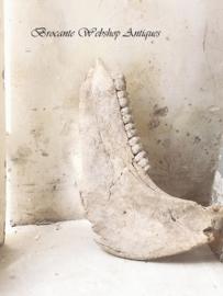 Fossiel kaak