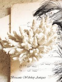 Antiek stuk koraal