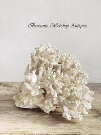 XL stuk wit koraal