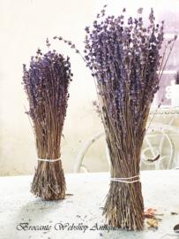 Bos lavendel
