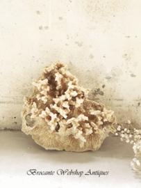Oud antiek stuk koraal