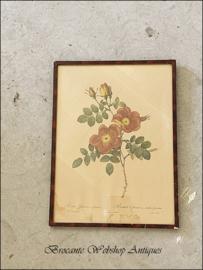 Redouté roses frame XL size