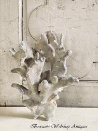 Groot stuk blauw/grijs koraal