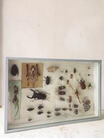 Insecten vitrine/ Insect vitrine