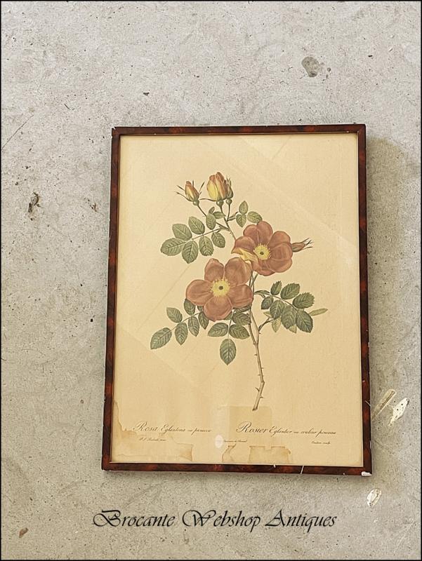 Redouté rose lijst met rozen