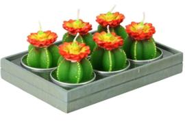 waxinelichtjes cactus met bloem