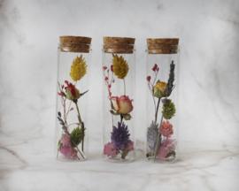droogbloemen in buisje mini