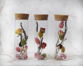 droogbloemen in buisje 14 cm