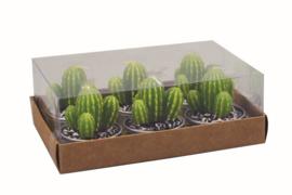 waxinelichtje  cactus