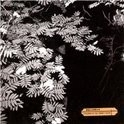Dolorean - Violence In The Snowy Fie LP