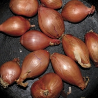 Ty Segall Fried Shallots LP