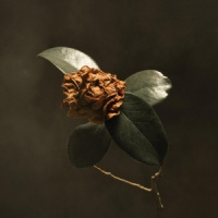 St. Paul & The Broken Bon Young Sick Camellia LP