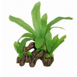 SF Easy Plants Hout Met Echinodorus 22cm