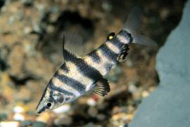 Aquariumvissen voorraad
