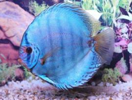 Aquarium grootte, visbezetting