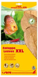 Sera Catappa Leaves XXL 10 stuks