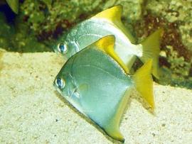 Brakwatervissen