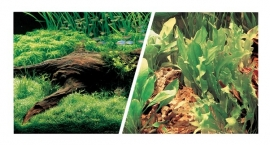 Achterwand poster ``planten``