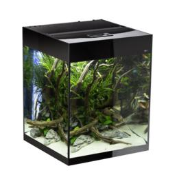 Osaka Glossy aquarium 50 Cube