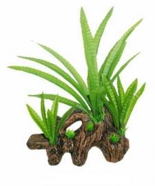 SF Easy Plants Hout Met Microsorium 22cm