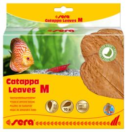 Sera Catappa Leaves Medium 10 stuks