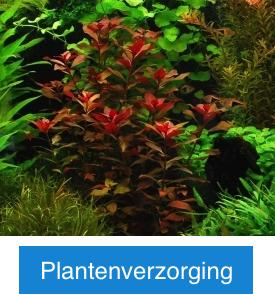 Plantenverzorging met knop.png