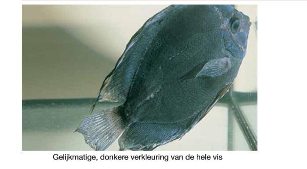 Vergiftiging vis.jpg