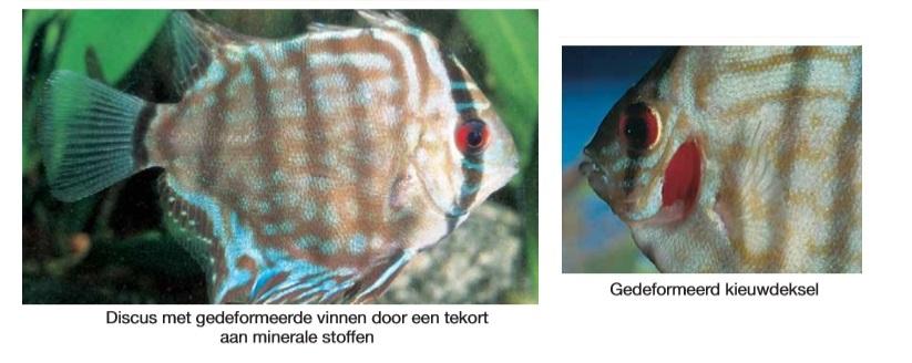 Verkeerde voeding vis.jpg