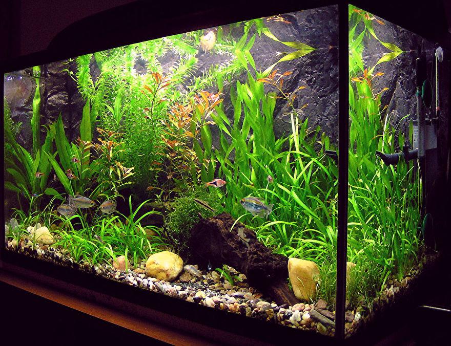 watertest-aquarium.jpg
