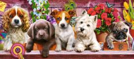 Puppies op een plank, Puppies on a shelf Castorland B-060368