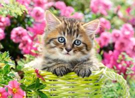 Kitten tussen de bloemen Castorland B-111039