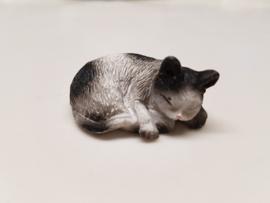 01786 Zwart/witte liggende slapende kat/poes. (AL)