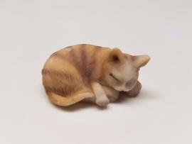 01782 Liggende, slapende licht bruine kat/poes. (AL)