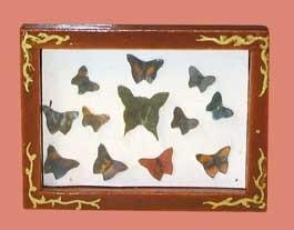 00338 Wandkastje met vlinders. (AP) (EM6569)