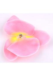 Orchidee. Roze / Geel