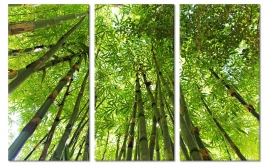 Bamboe Bos Schilderij