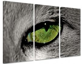 Schilderij Kattenoog