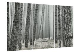 In het bos canvas schilderij