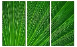 Palmblad Schilderij