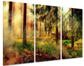 Schilderij Mist in Bos