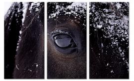 Schilderij Oog van het Paard