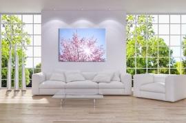 Sakura Bloesem Schilderij