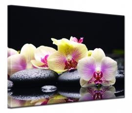 Zen Orchidee
