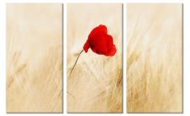 Poppy in Field Canvas Art