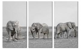 Zwart Wit Schilderij Olifanten